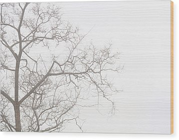 Tree Against A White Sky In The Early Morning Hours Wood Print by Gal Ashkenazi