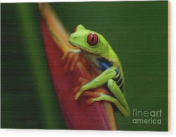 Tree Frog 19 Wood Print by Bob Christopher