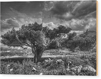 Tree In The Wind Wood Print by Stavros Argyropoulos