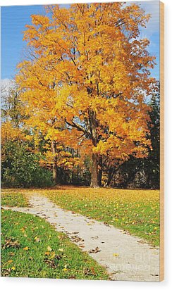 Wood Print featuring the photograph Tree Of Gold by Joe  Ng