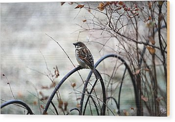 Wood Print featuring the photograph Watchful Eye by Elizabeth Winter