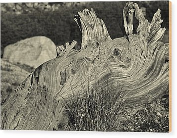 Weathered Wood Print by Colleen Coccia