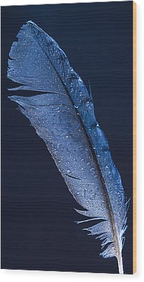 Wet Jay Wood Print by Jean Noren
