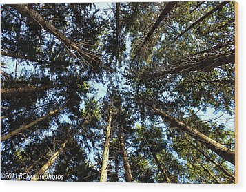 Wood Print featuring the photograph Whispering Pines by Rachel Cohen