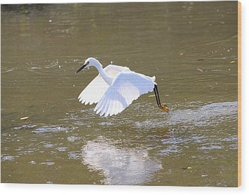 Wood Print featuring the photograph White Egret by Jeanne Andrews