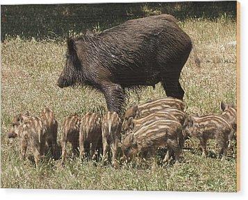 Wild Boar Wood Print by Steve Mangan