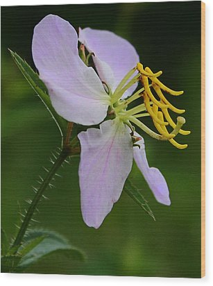 Wild Orchid Wood Print by Karen Harrison