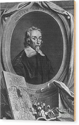 William Harvey, English Physician Wood Print by Photo Researchers