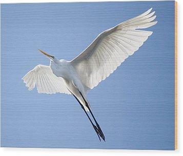 Wings Wood Print by Paulette Thomas