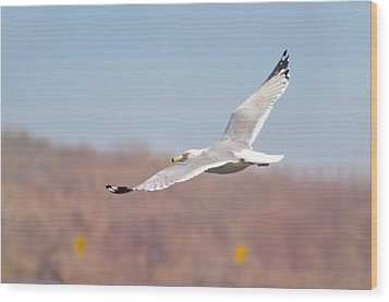 Wingspan Wood Print by Bill Cannon
