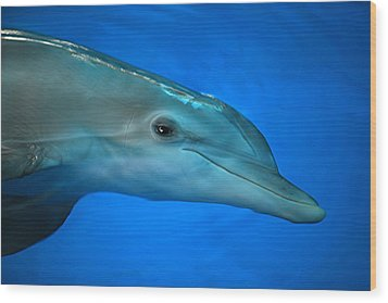 Wood Print featuring the photograph Winter The Dolphin by Doug McPherson