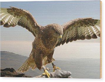 Wyre Hawk Wood Print