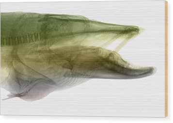 X-ray Of Muskie Wood Print by Ted Kinsman