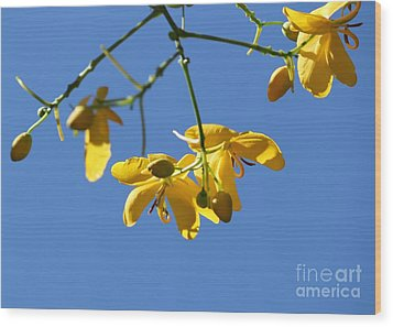 Yellow And Blue Wood Print by Theresa Willingham