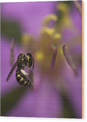 Yellow Faced Bee Wood Print by Zoe Ferrie