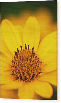 Yellow Flower Wood Print by Andre Faubert