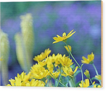Yellow Flowers Wood Print by Becky Lodes