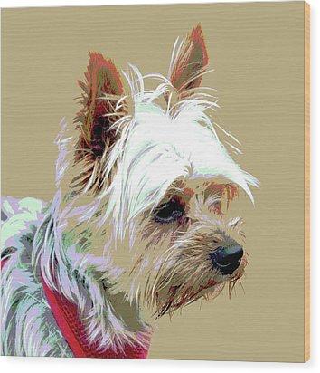 Yorkshire Terrier Wood Print by Dorrie Pelzer