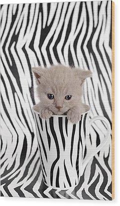 Zebra Cat Wood Print by Waldek Dabrowski