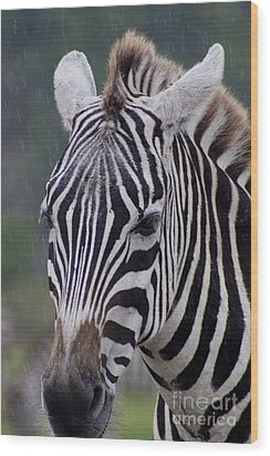 Zebra Wood Print by Thomas Marchessault
