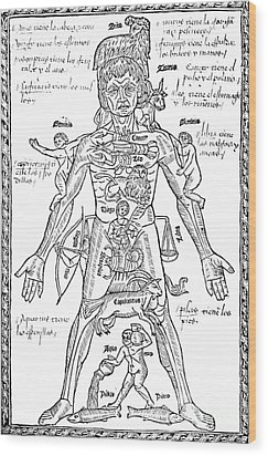 Zodiac Man, Medical Astrology Wood Print by Science Source
