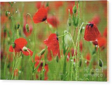 Field Of Poppies. Wood Print by Bernard Jaubert