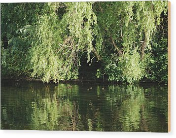 St. James Park London Wood Print by Harvey Barrison