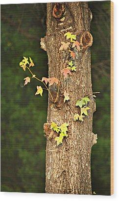1209-0859 September Tease Wood Print by Randy Forrester