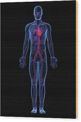 Cardiovascular System, Artwork Wood Print by Sciepro