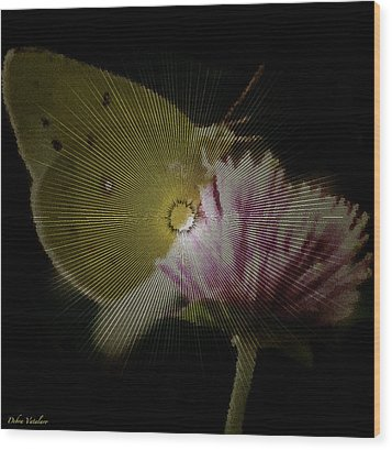 Butterfly Collection Design Wood Print by Debra     Vatalaro