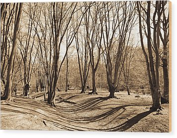 Ambresbury Banks Bronze Age Fortification Wood Print by David Pyatt