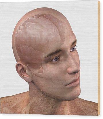 Head Anatomy, Artwork Wood Print by Sciepro