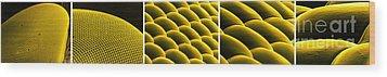 Deer Fly Eye, Sem Wood Print by Science Source