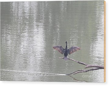 Double-crested Cormorant Wood Print by Jack R Brock