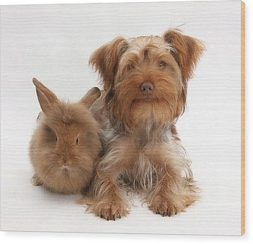 Puppy And Rabbit Wood Print by Mark Taylor