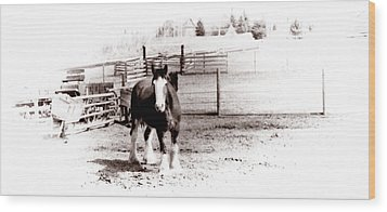 1900  Clydesdale Horse Wood Print by Marcin and Dawid Witukiewicz