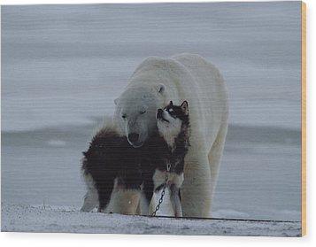 A Polar Bear Ursus Maritimus Wood Print by Norbert Rosing