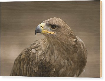 A Tawny Eagle At A Wild Bird Sanctuary Wood Print by Joel Sartore