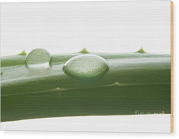 Aloe Vera Wood Print by Blink Images