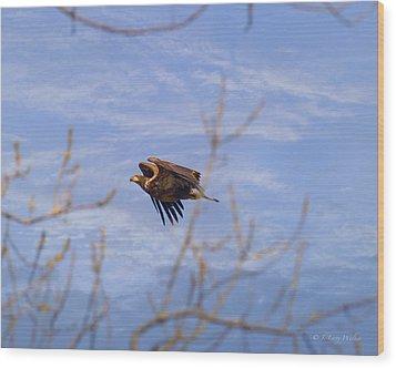 Bald Eagle - Immature Wood Print by J Larry Walker
