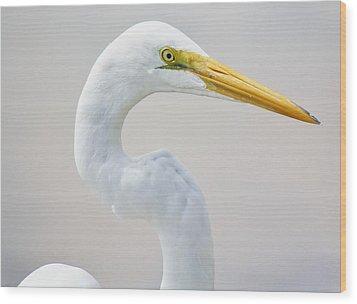 Beautiful Great White Egret Wood Print by Paulette Thomas