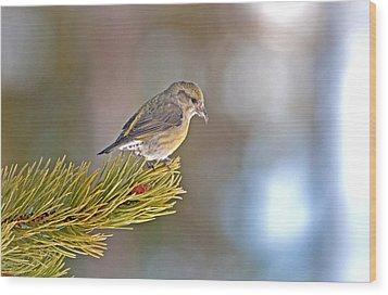 Bird Wood Print by Elijah Weber