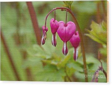Bleeding Hearts Wood Print by Sean Griffin