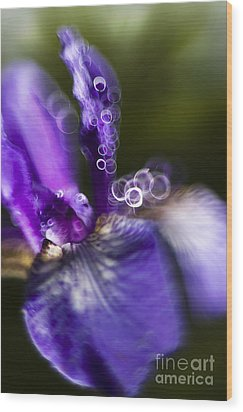 Blue Iris Wood Print by Angel  Tarantella