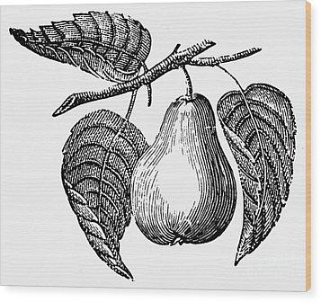Botany: Pear Wood Print by Granger