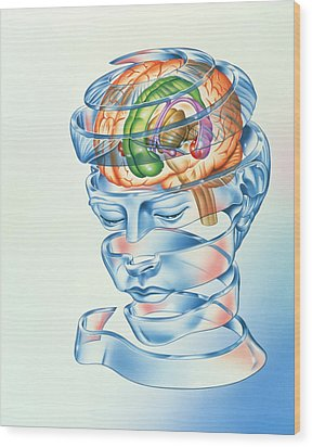 Brain Limbic System Wood Print by John Bavosi