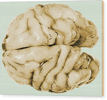 Brain Wood Print by Science Source