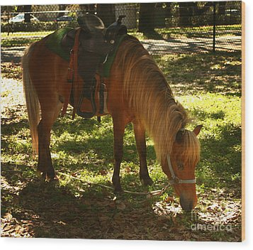 Brown Horse Wood Print by Blink Images