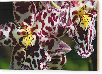 C Ribet Orchids Wood Print by C Ribet