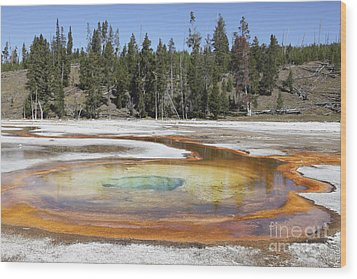 Chromatic Pool Hot Spring, Upper Geyser Wood Print by Richard Roscoe